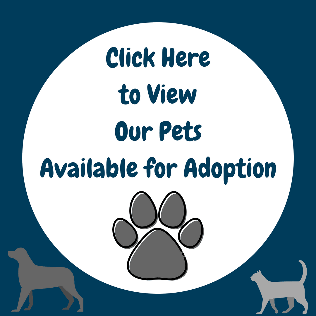 Click Here to View Our Adoptable Pets-1