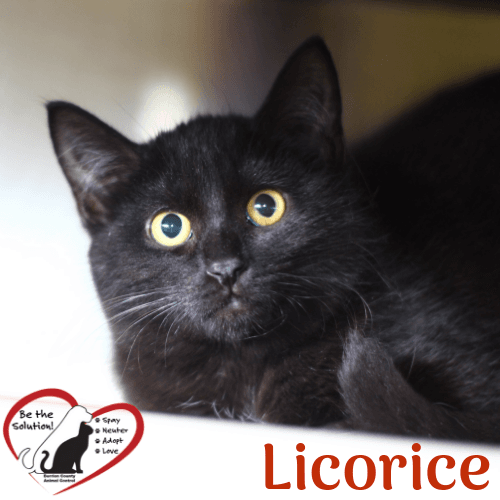licorice 4848 main image