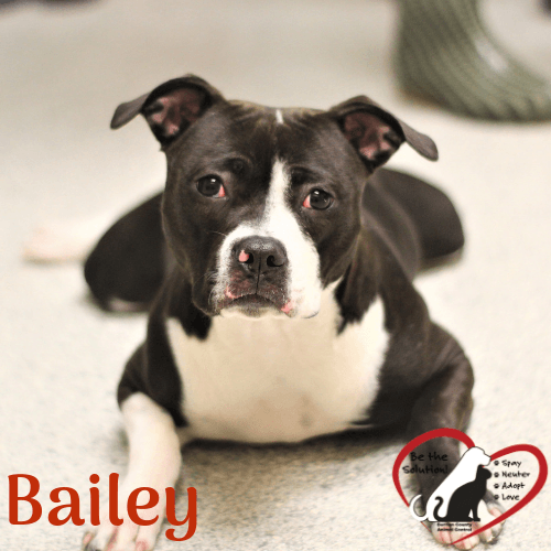 Bailey 614 main image