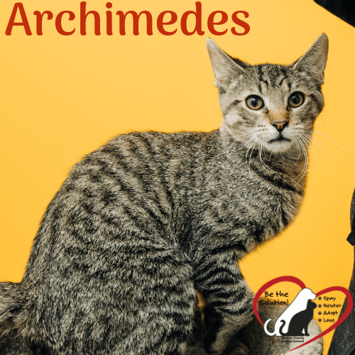 Archimedes 451 main image