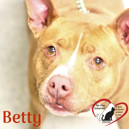Betty 1083 main image