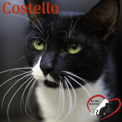 Costello 69